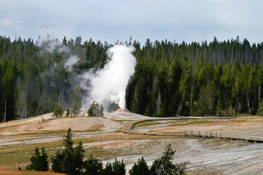 Hot Steam Dog Yellowstone National Park Wy Photograph