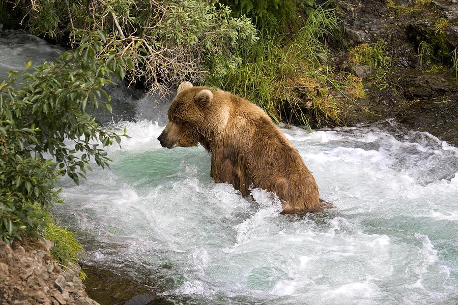 hot-tub-bear-dewain-maney.jpg