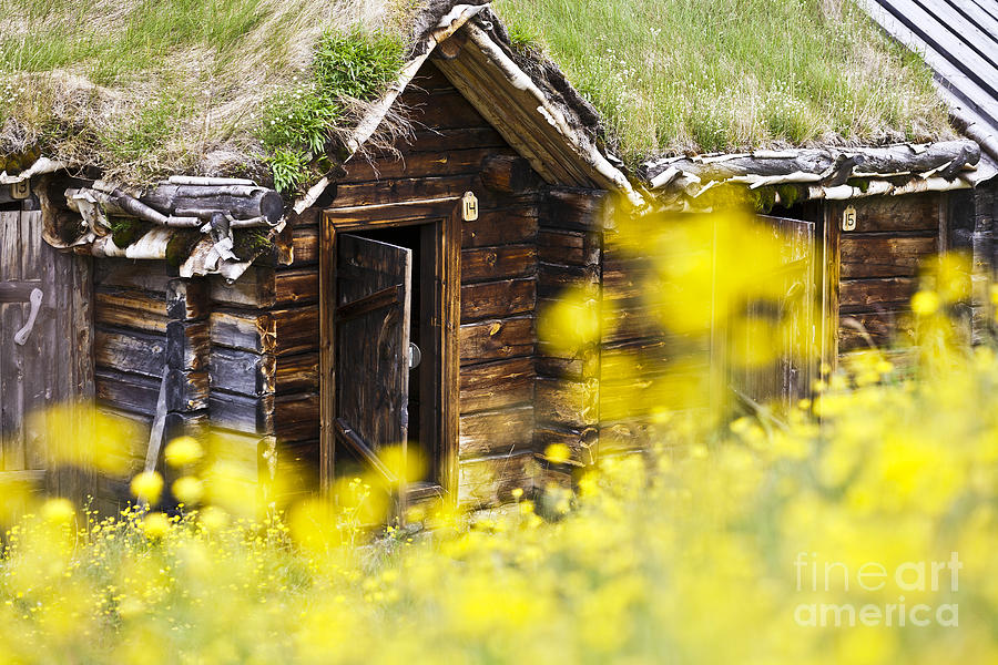 House Behind Yellow Flowers Photograph