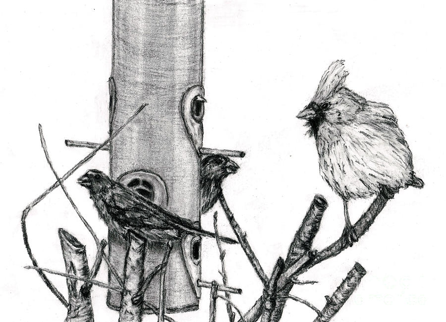 House Finches And Cardinal Drawing