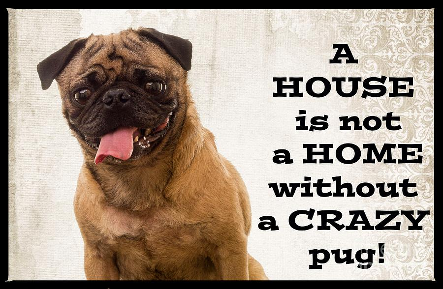 House is not a home without a crazy pug is a photograph by edward