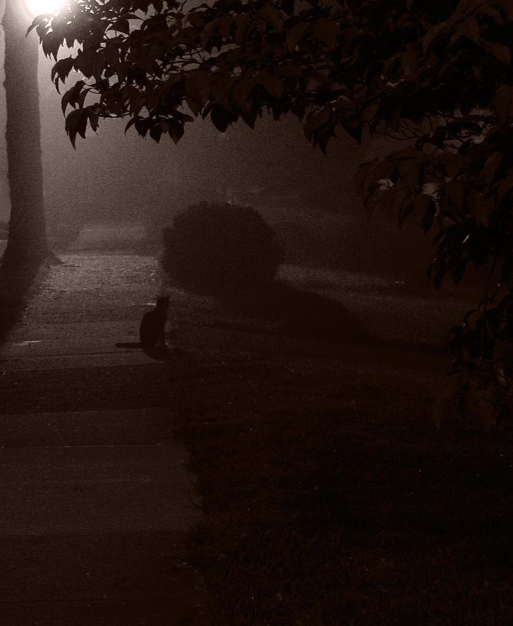 Photograph - Houses Seem Asleep by Mark K
