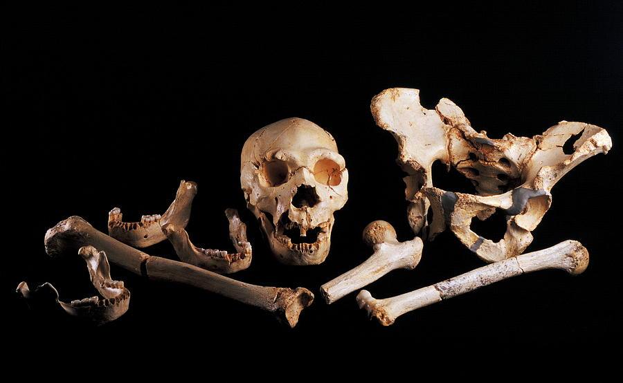 Human Fossils, Sima De Los Huesos Photograph
