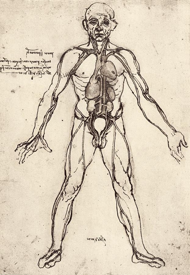 Human Venous System Photograph