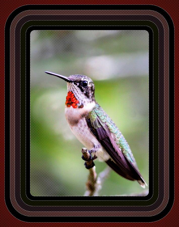 Hummingbird Card Photograph - Hummingbird Card by Travis Truelove