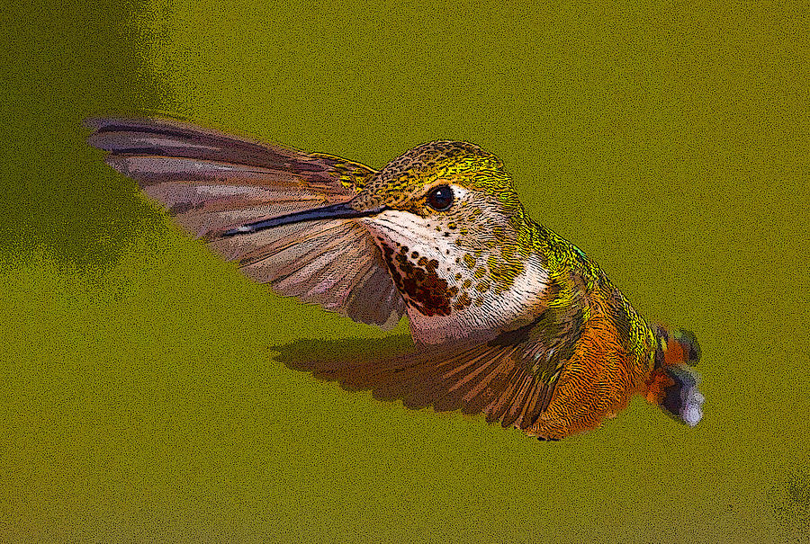 Hummingbird In Flight- Abstract Photograph
