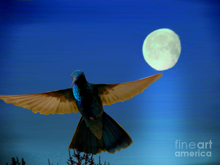 Hummingbird Moon II Photograph  - Hummingbird Moon II Fine Art Print