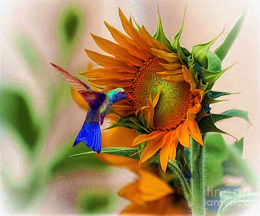 Hummingbird On Sunflower Photograph