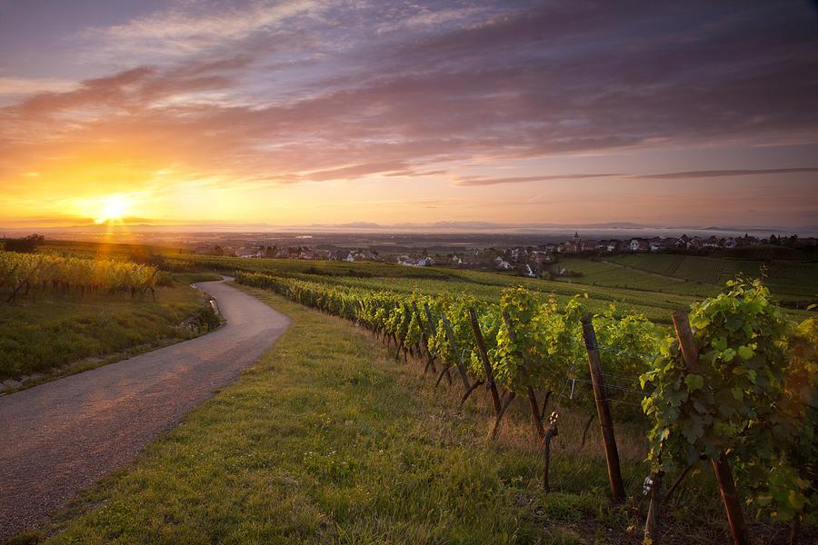 Hunawihr Alsace Photograph