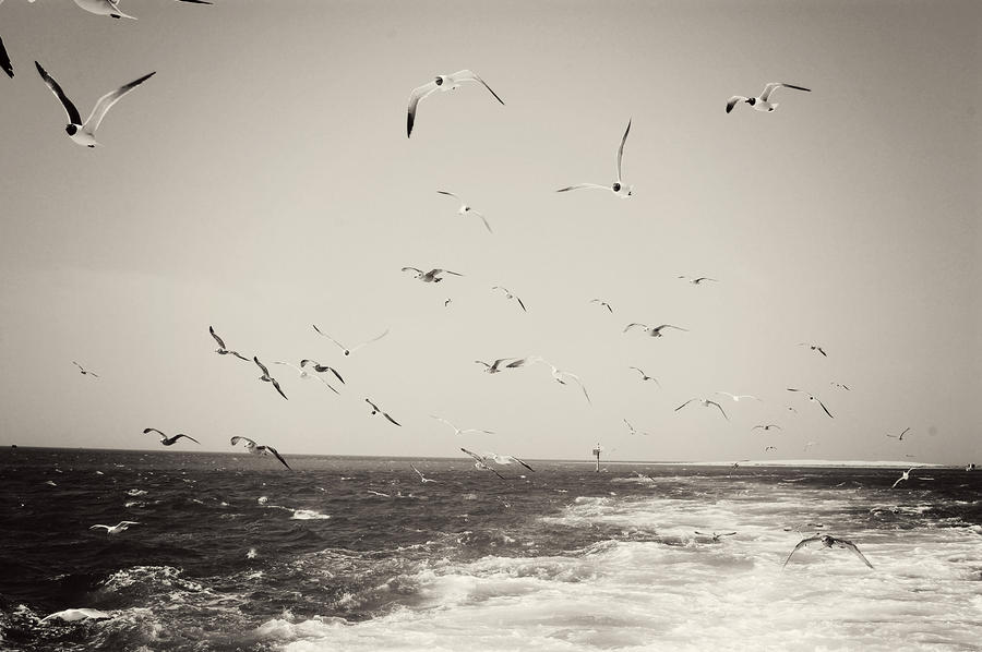 Seagulls Photograph - Hungry by Jessica Wilson