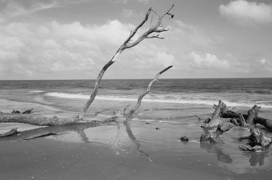 Photograph - Hunting Island State Park by Donnie Smith