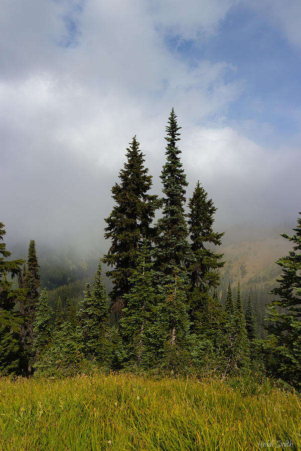 Hurricane Ridge Beauty Photograph