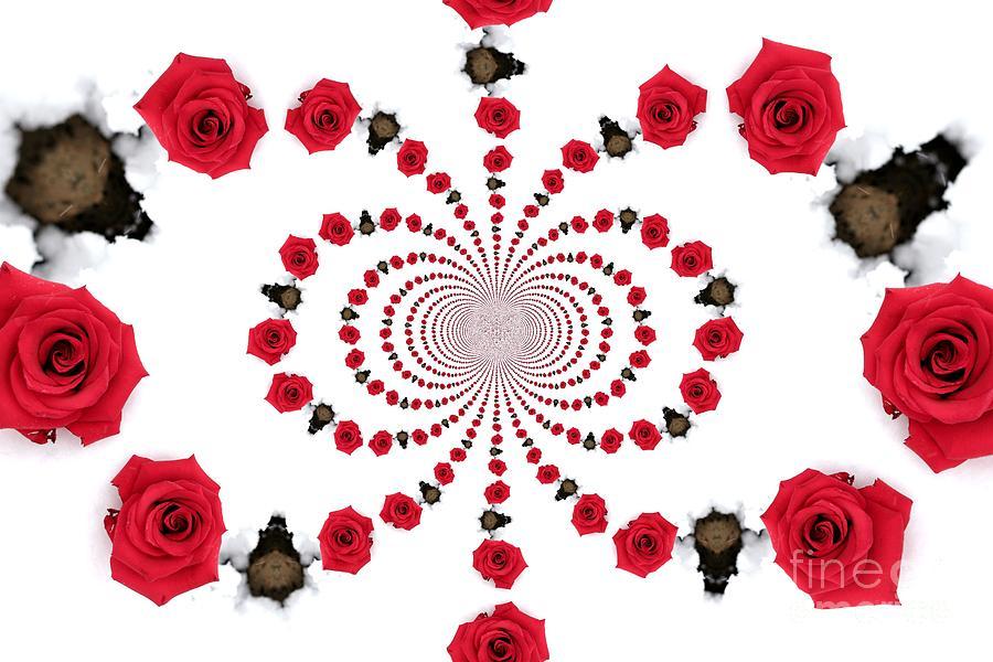 Hypnotic Roses Photograph