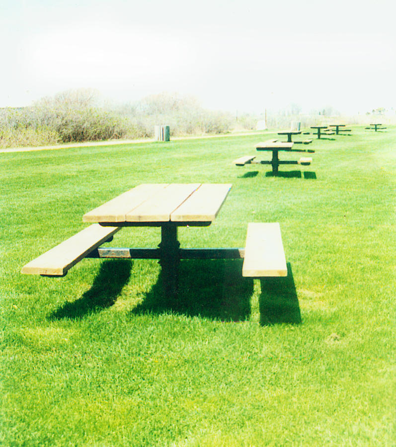 I Brought The Table To The Picnic Photograph