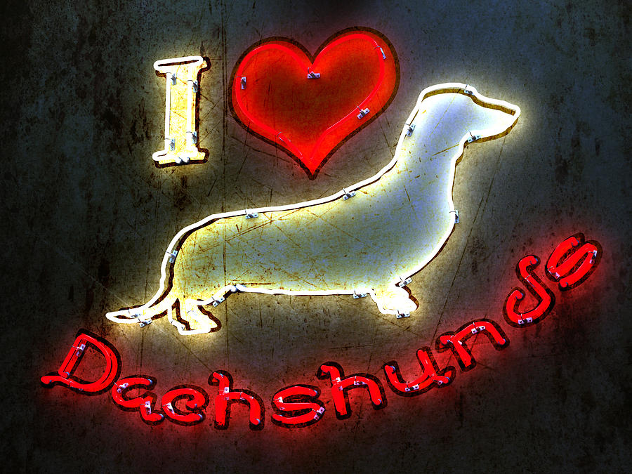 I Love Dachshunds Digital Art  - I Love Dachshunds Fine Art Print