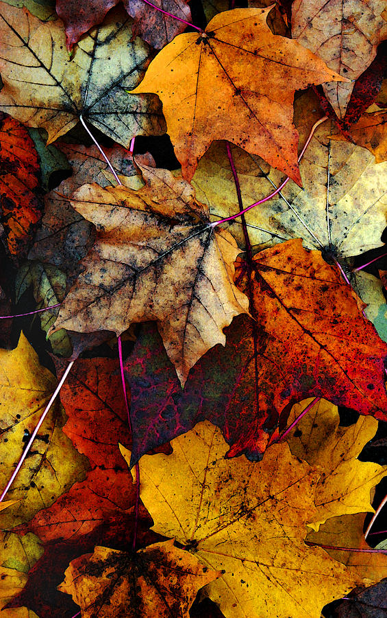 I Love Fall 2 Photograph  - I Love Fall 2 Fine Art Print