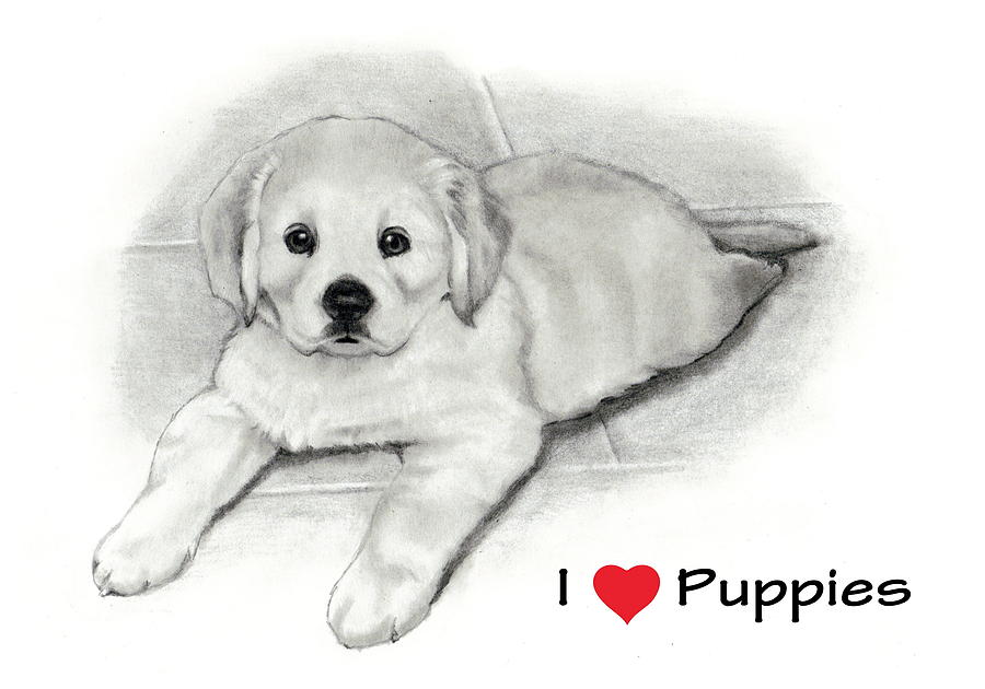 I Love Puppies Golden Retriever Drawing  - I Love Puppies Golden Retriever Fine Art Print