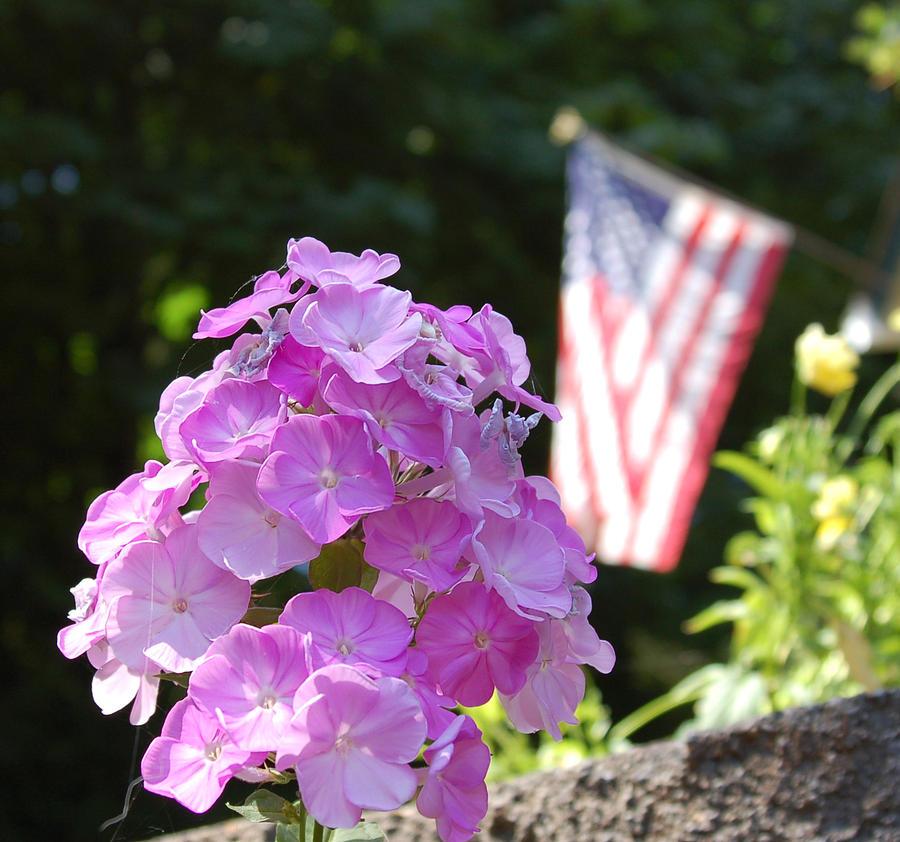 Flower Photograph - I Pledge Allegiance by Teresa Johnson