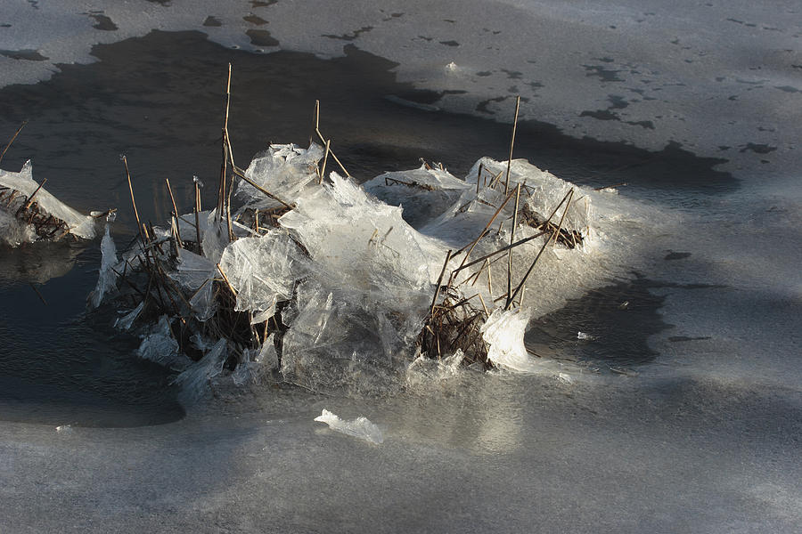 Ice And Salt Marsh Grasses Photograph