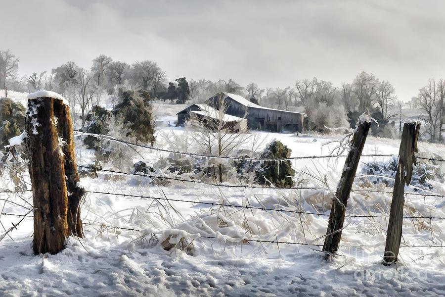Ice Storm - D004825a Photograph