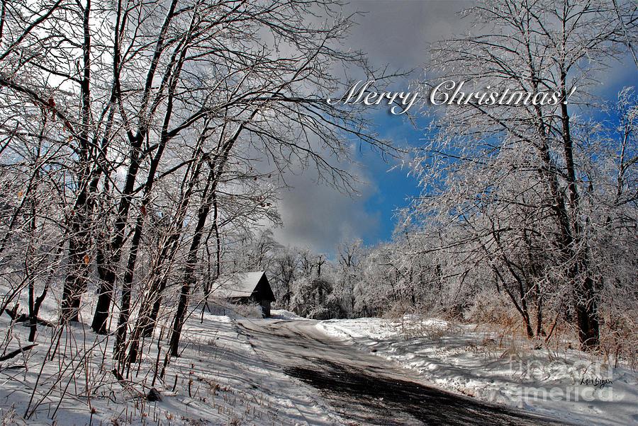 Ice Storm Christmas Card Photograph