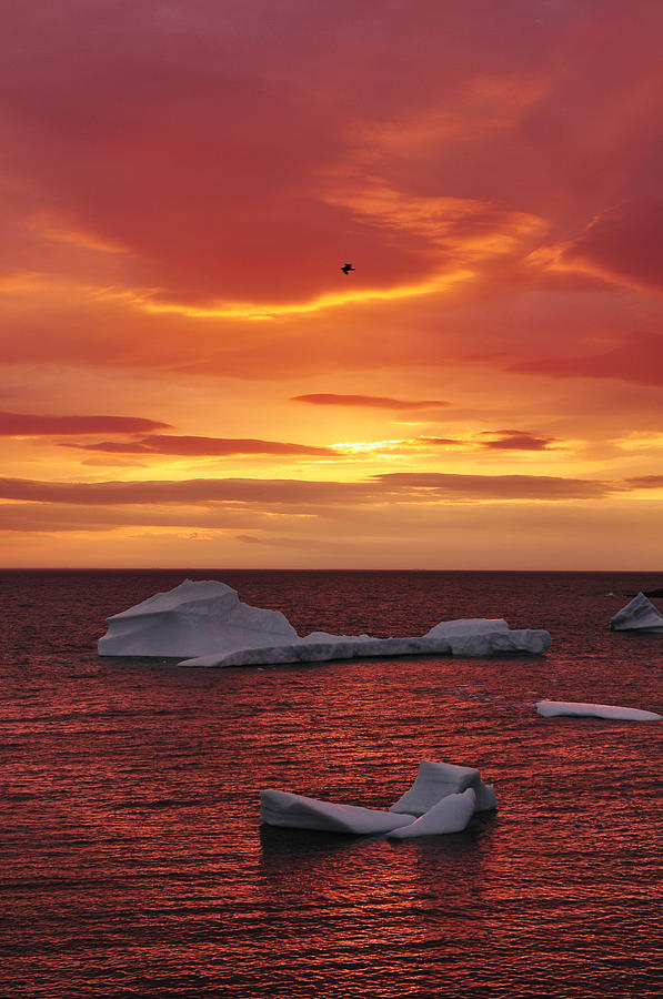 Icebergs at sunset photograph by christian heeb for Christian heeb