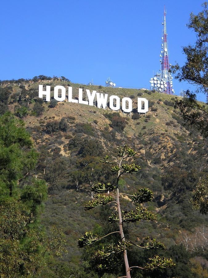 Hollywood Sign Vintage 25134