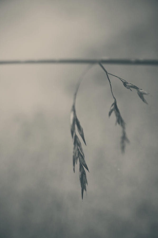 Grass Photograph - If You Lost Your Love For Me by Laurie Search