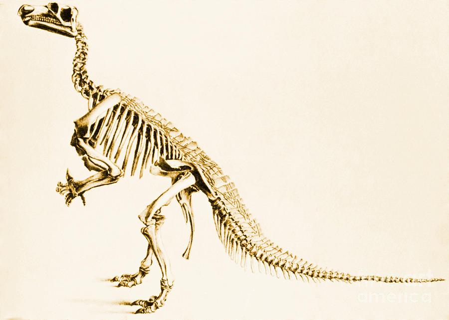 Iguanodon Mesozoic Dinosaur Photograph
