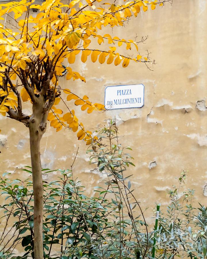 Il Piazza Malcontenti Photograph