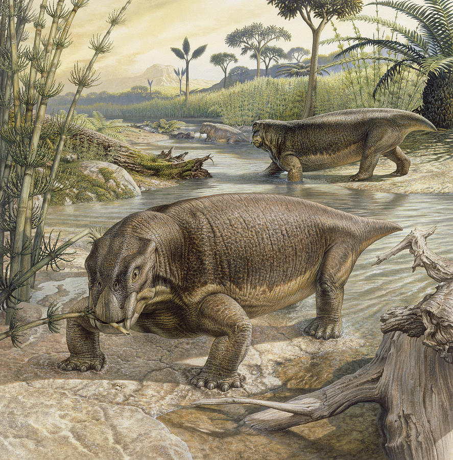 Illustration Of Lystrosaurus Photograph