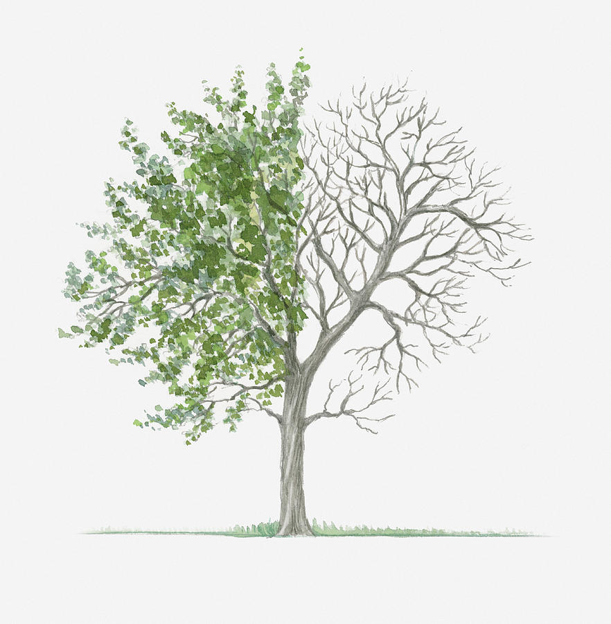 bare tree coloring page free here