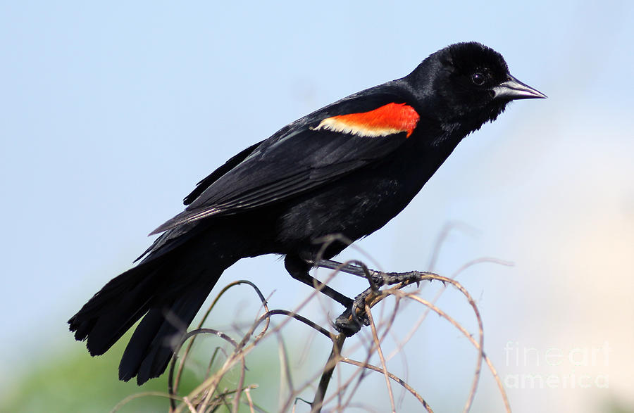 Im Like A Bird Photograph