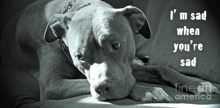 Im Sad When Youre Sad Photograph
