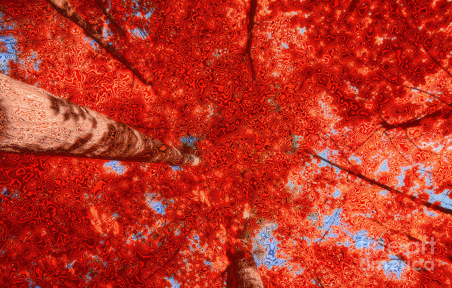 Impression Of Red Maple Photograph