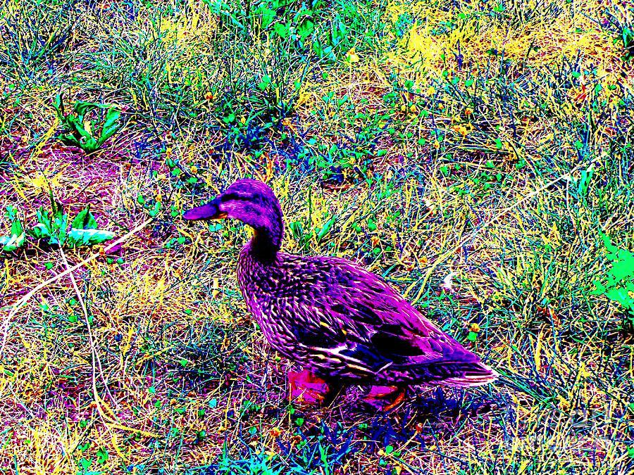 Impressionistic Mallard Duck Photograph