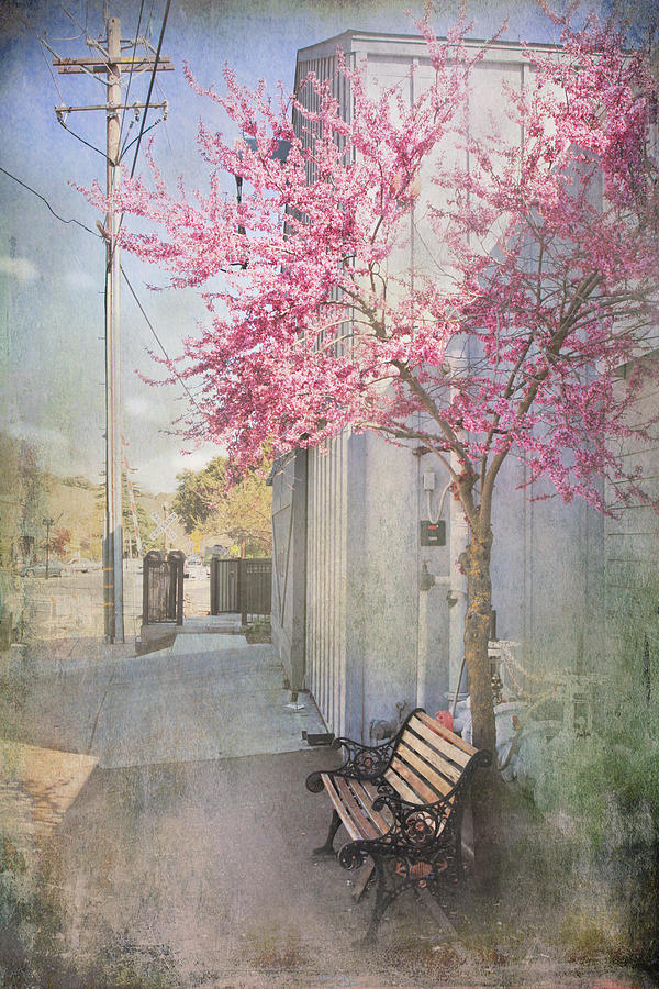 Bench Photograph - In A Small Town by Laurie Search