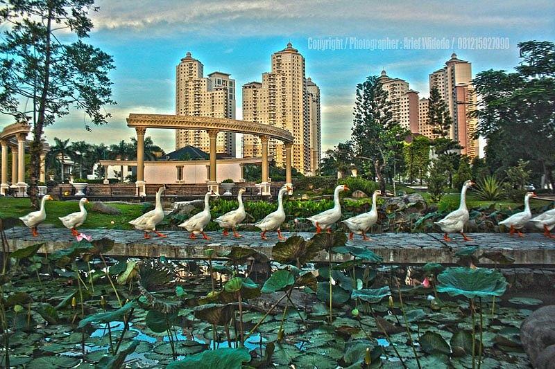 Park Photograph - In Harmony by Arief Widodo