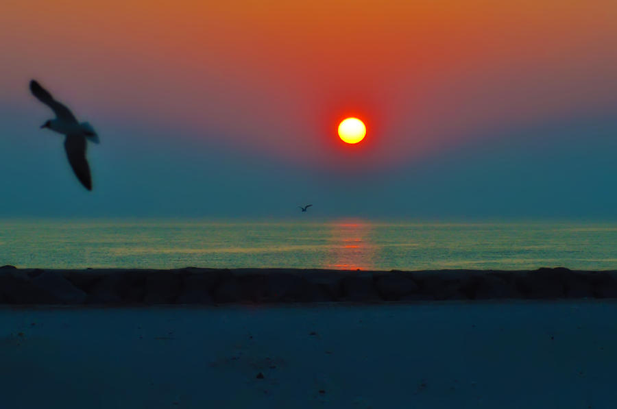 In The Morning Sun Photograph
