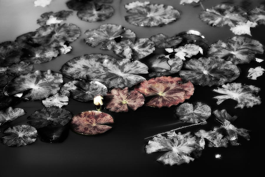 In The Pond Photograph  - In The Pond Fine Art Print