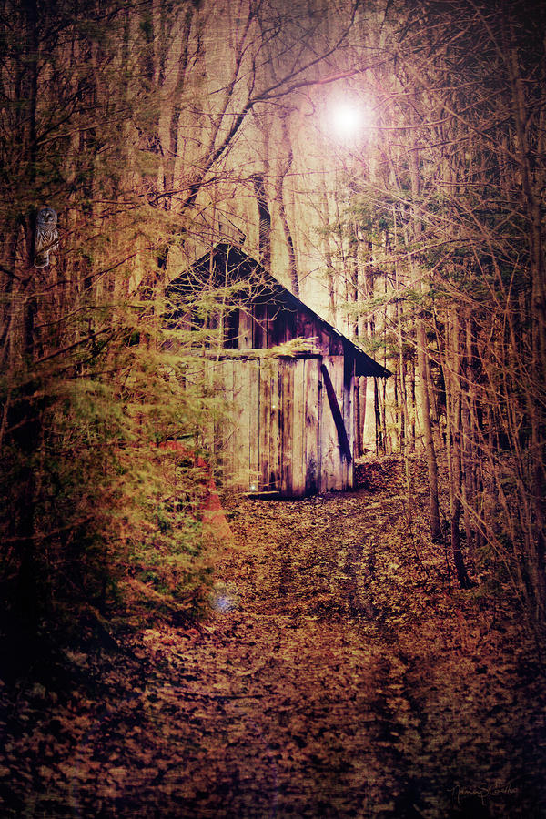 In The Sugar Bush Digital Art  - In The Sugar Bush Fine Art Print