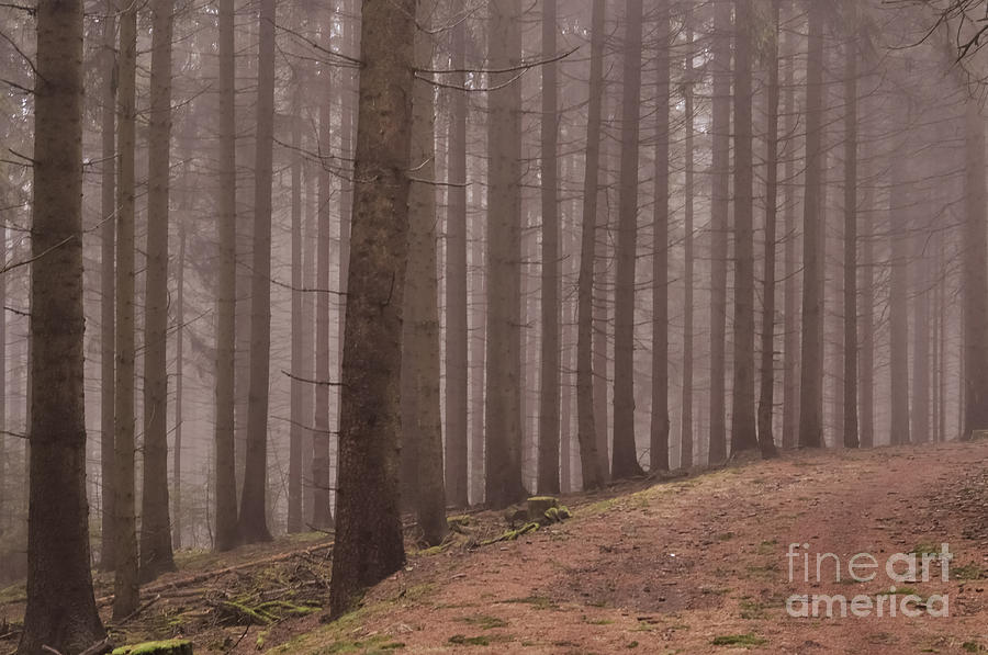 in the woods I Photograph  - in the woods I Fine Art Print