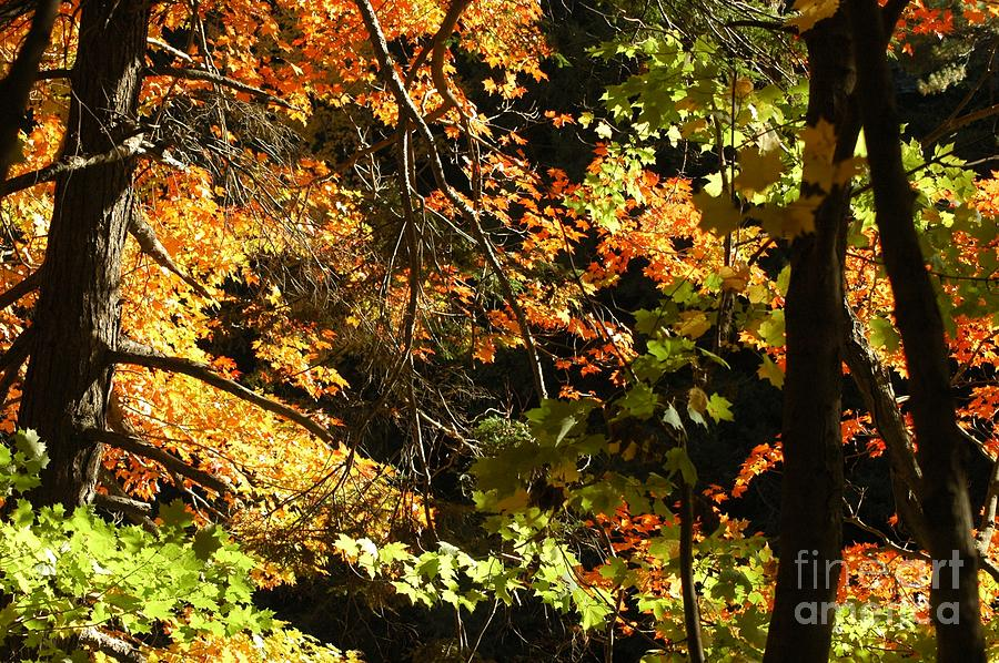 In The Woods Photograph