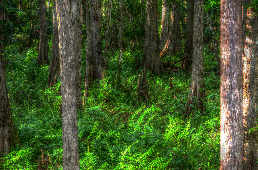 In The Woods Photograph  - In The Woods Fine Art Print