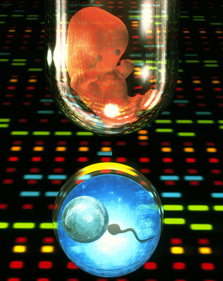 In Vitro Fertilization Photograph