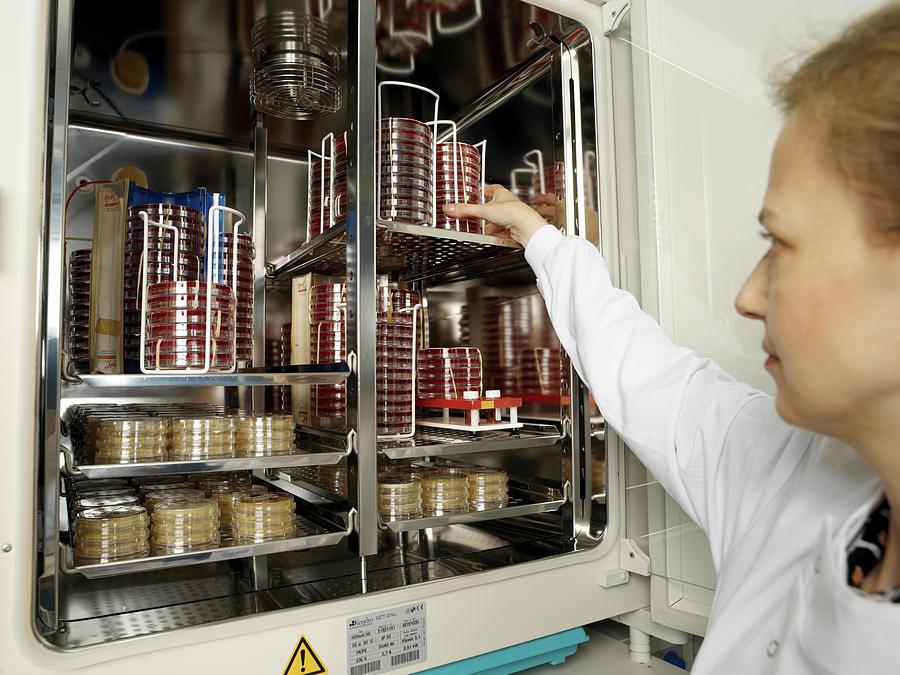 Incubator Photograph - Incubating Bacteria by Tek Image