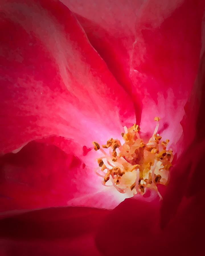 Flowers Tea Rose Peony My Yard 5-13-09 Photograph - Inner Sanctum by David Coblitz