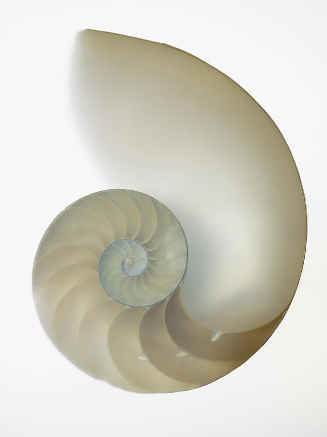 Inside Of Large White Nautilus Shell On White Photograph  - Inside Of Large White Nautilus Shell On White Fine Art Print