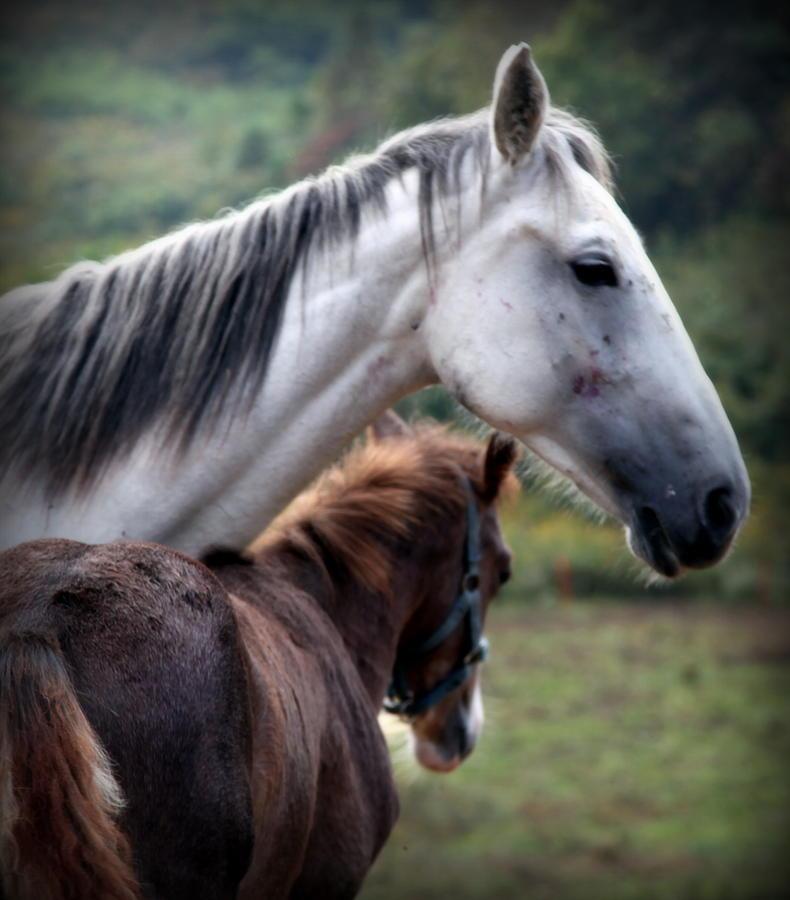 Horses Photograph - Instinct Of Love by Karen Wiles