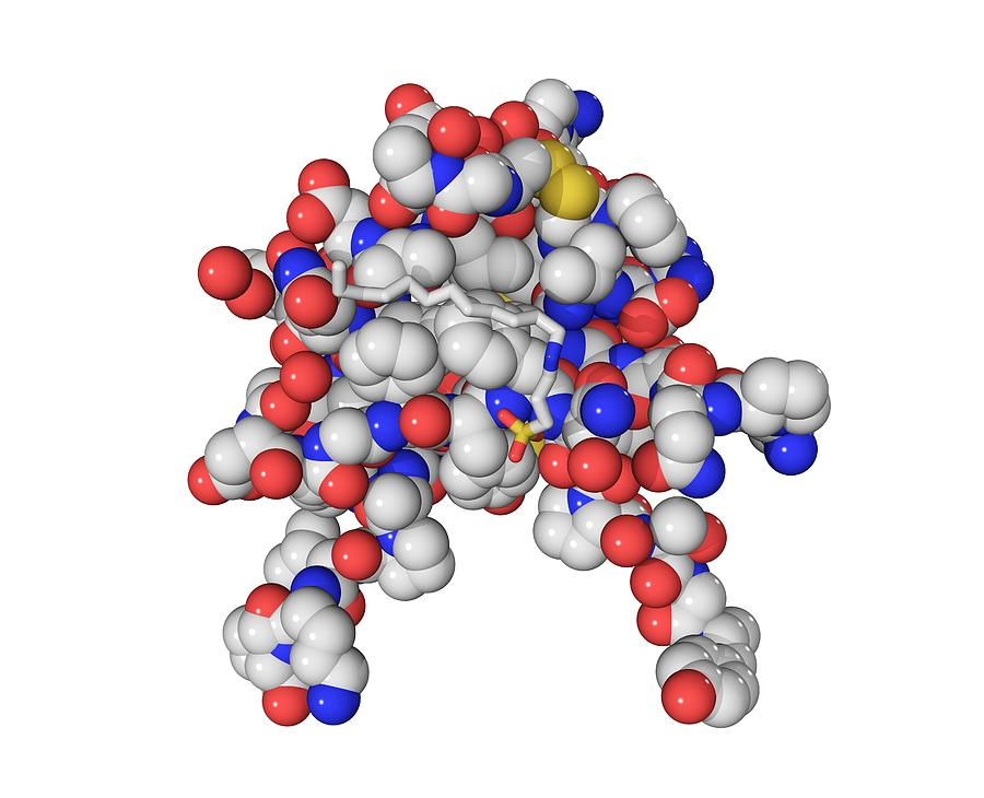 Insulin-like Growth 1 Factor Molecule Photograph
